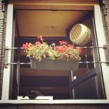 Flower decoration in Amsterdam